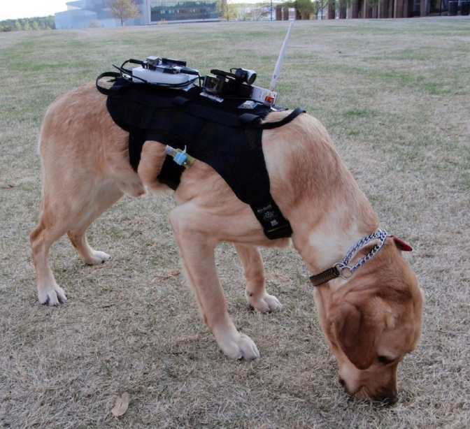 New Device Allows Further Communication Between Humans and Dogs